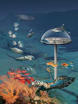 Onder water uitkijk punt van Dray van Beeck