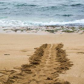 Hawaiian green sea turtle track sur Andrea Ooms