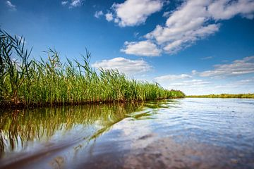 Nederlands polder landschap met rietlanden  en waterwegen van Fotografiecor .nl