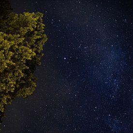 Sterne, Belgien von Nynke Altenburg