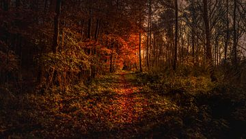 Erholung in Holland von René Holtslag