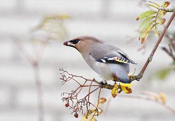 Pestvogel van Roos Piek