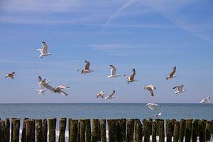 Vliegende zeemeeuwen boven de golfbrekers