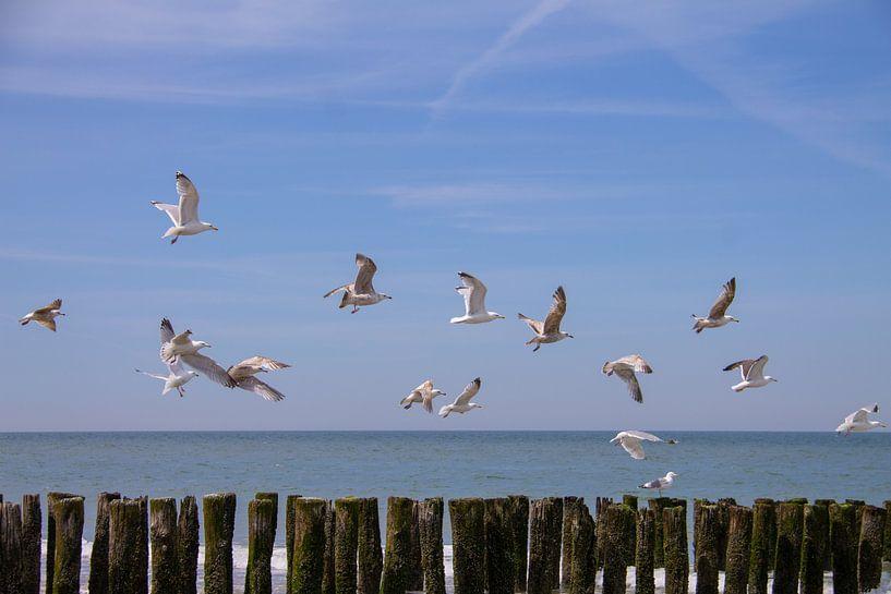 Vliegende zeemeeuwen boven de golfbrekers van Marco Leeggangers