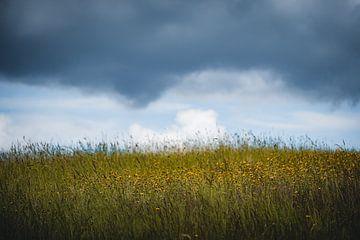 Bloemenweide met wolken van Thilo Wagner