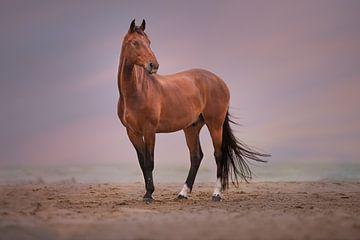 paard op het strand van Kim van Beveren
