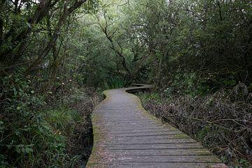 Brabantse bossen van