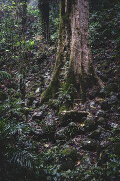 regenwoud van Ennio Brehm