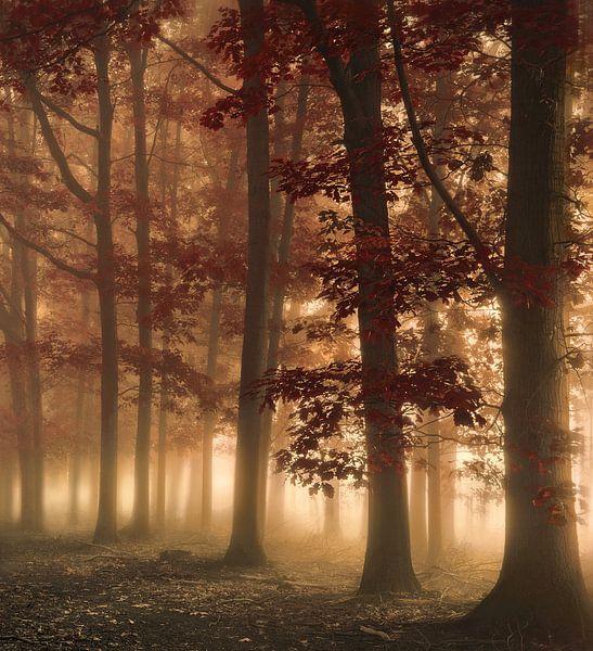 Breath of the sun van Rob Visser
