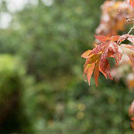 Herfst blad in de regen van Cathy Php