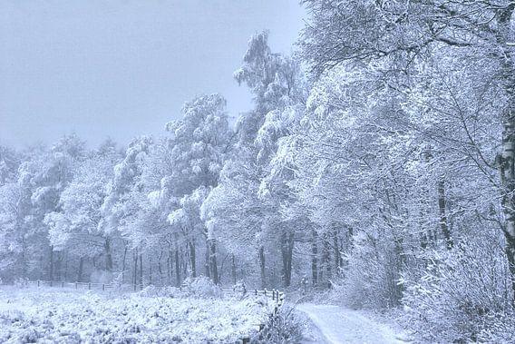 bospad met sneeuw beschenen