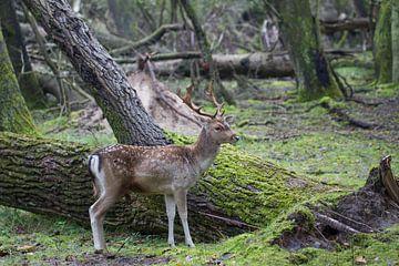 Hirsche im Wald von Hanneke Ruijterlinde