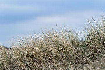 Silence dans les dunes sur Samantha van Leeuwen
