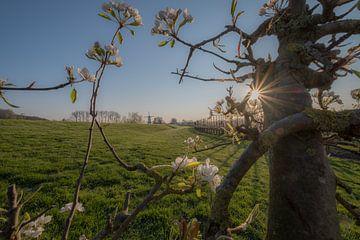 Den Schmetterling zwischen den Obstbäumen fräsen und blühen von Moetwil en van Dijk - Fotografie