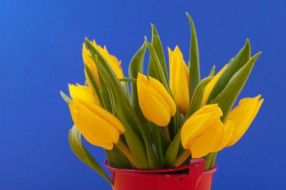 Boeket gele tulpen tegen blauwe achtergrond