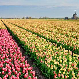 Mühle unter den blühenden Tulpen von eric van der eijk