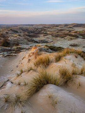 Duin in Zuid Holland van Dirk van Egmond