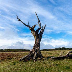 Het Prehistorische Bos 3 van Freek van den Driesschen