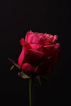 Ik geef je een roos von Odette Kleeblatt