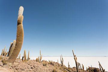 Isla Incahuasi Salar de Uyuni Bolivia van