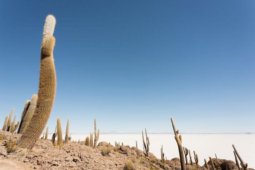 Isla Incahuasi Salar de Uyuni Bolivia van Ellen van Drunen