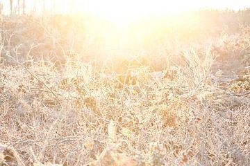 Un matin d'hiver ensoleillé sur Remke Spijkers