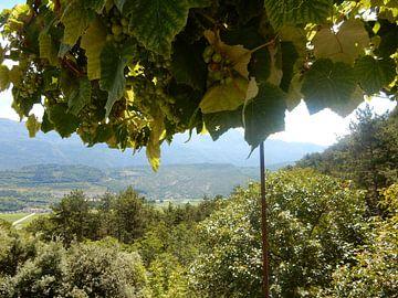 Druiven met uitzicht in Italië van Joke te Grotenhuis
