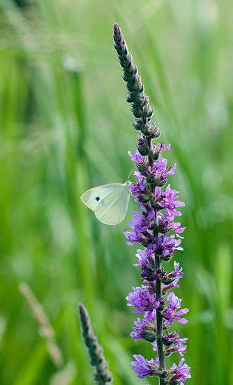 Vlinder op een mooie bloem