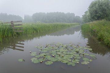 Polderpark Cronesteyn, Leiden von Carla Matthee