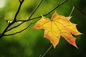 Gouden herfstblad van