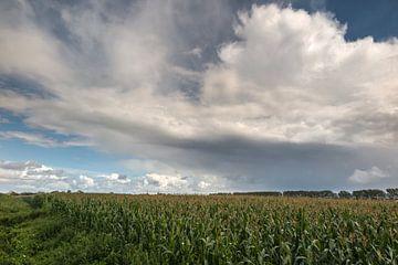 Wolken über Maisfelder van