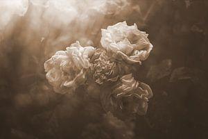 oude rozen van
