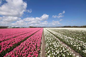 Landschaft mit rosa und weißen Tulpen von Maurice de vries