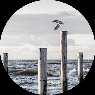 Vliegen in vrijheid van Judith Veenstra