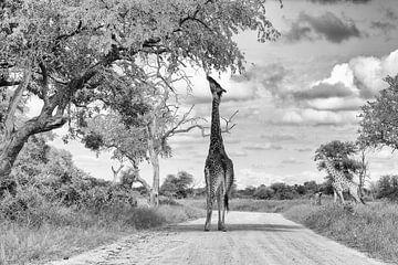 Giraffe auf der Strasse von Angelika Stern