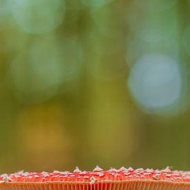 Rode vliegenzwam met groene herfst achtergrond. van Michèle Huge