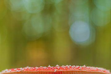 Roter Fliegenpilz mit grünem Herbsthintergrund. von Michèle Huge