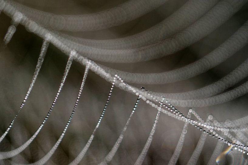 Detail van een bedauwde spinnenweb. von Astrid Brouwers