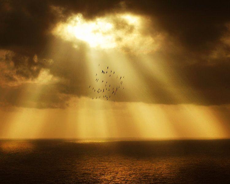 Zonnestralen van Harrie Muis
