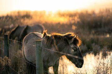 Pferde bei Sonnenuntergang von Bert-Jan de Wagenaar