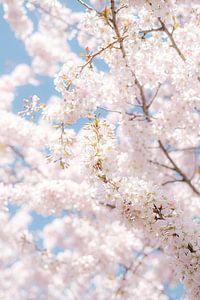 Japanse kersenbloesem van Melissa Peltenburg
