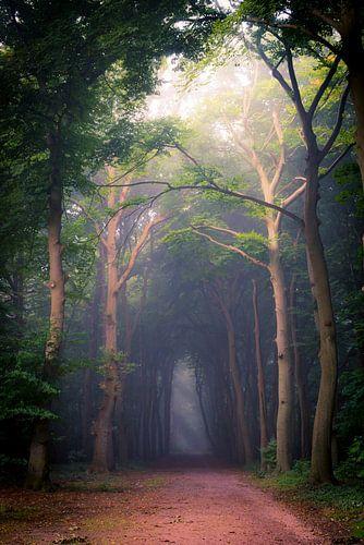 Corversbos, de weg naar Gooilust van Pascal Raymond Dorland