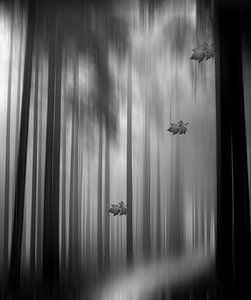 Black Forest van