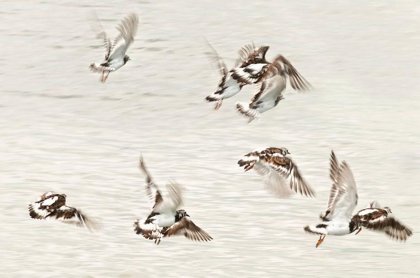 Dansende vogels van Ellen Driesse