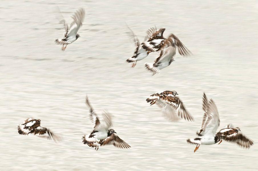 Dansende vogels