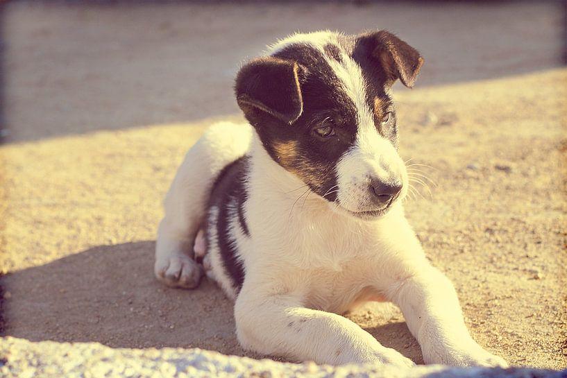 Puppy dog relaxing in the sun von Menno van der Werf
