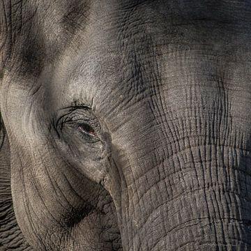 Aziatische Olifant van Stefan Koeman