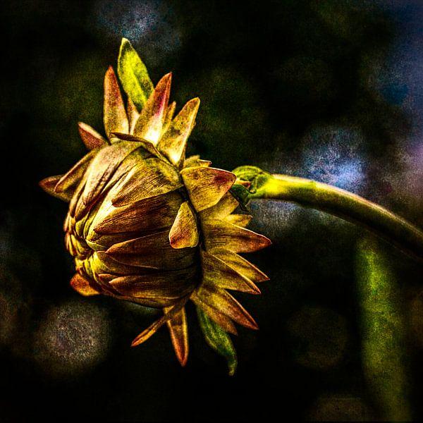 Fleur de paille 2 sur Dick Jeukens