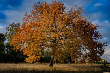 Herbstbaum (Sint Pietersberg) von Arash Mahdawi Nader