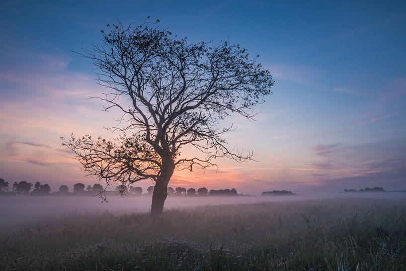 Boom in ochtendmist van Mirjam Boerhoop - Oudenaarden